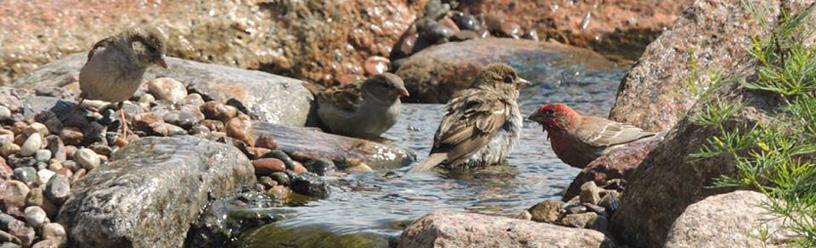 La vie au jardin aquatique oiseaux et cascades jardins - Comment attirer les oiseaux dans son jardin ...