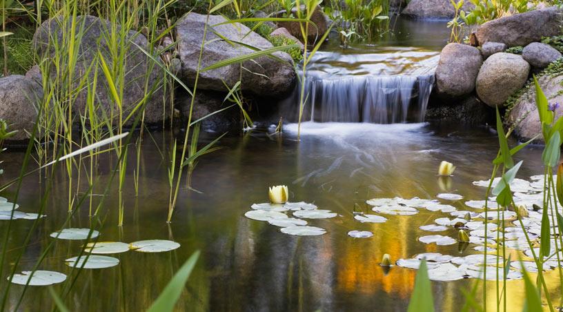 Article fleurs plantes et jardins jardins aquadesign for Fleurs plantes et jardins