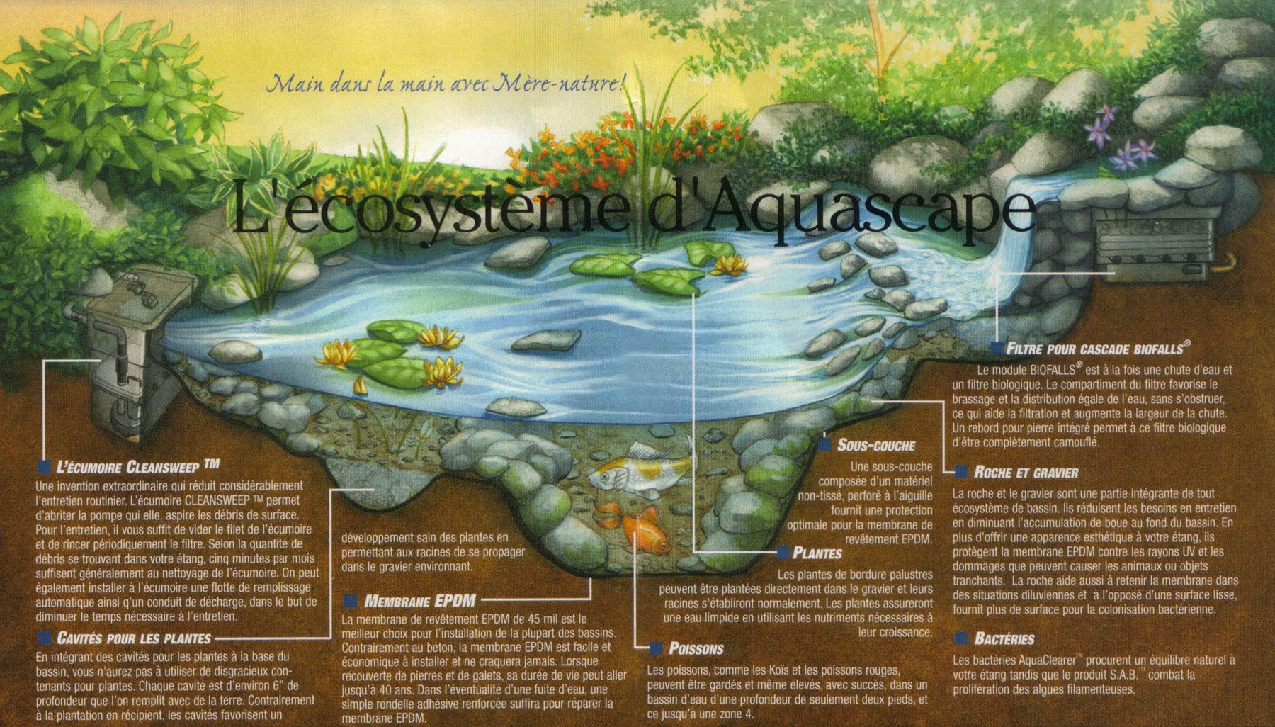 Jardin d 39 eau am nagement paysager avec bassin et cascade for D jardin