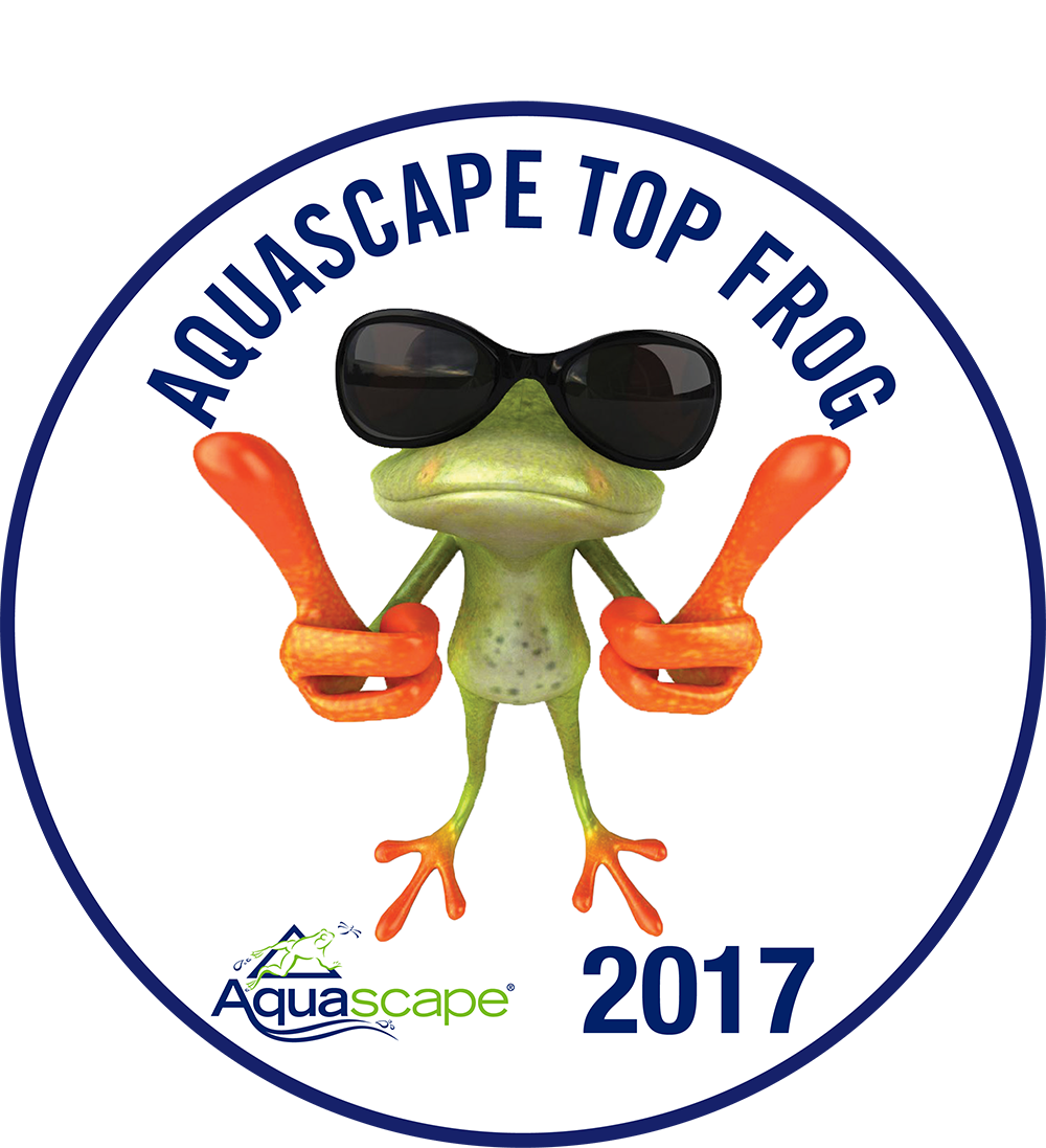 Jardinaquadesign Aquascape TopFrog