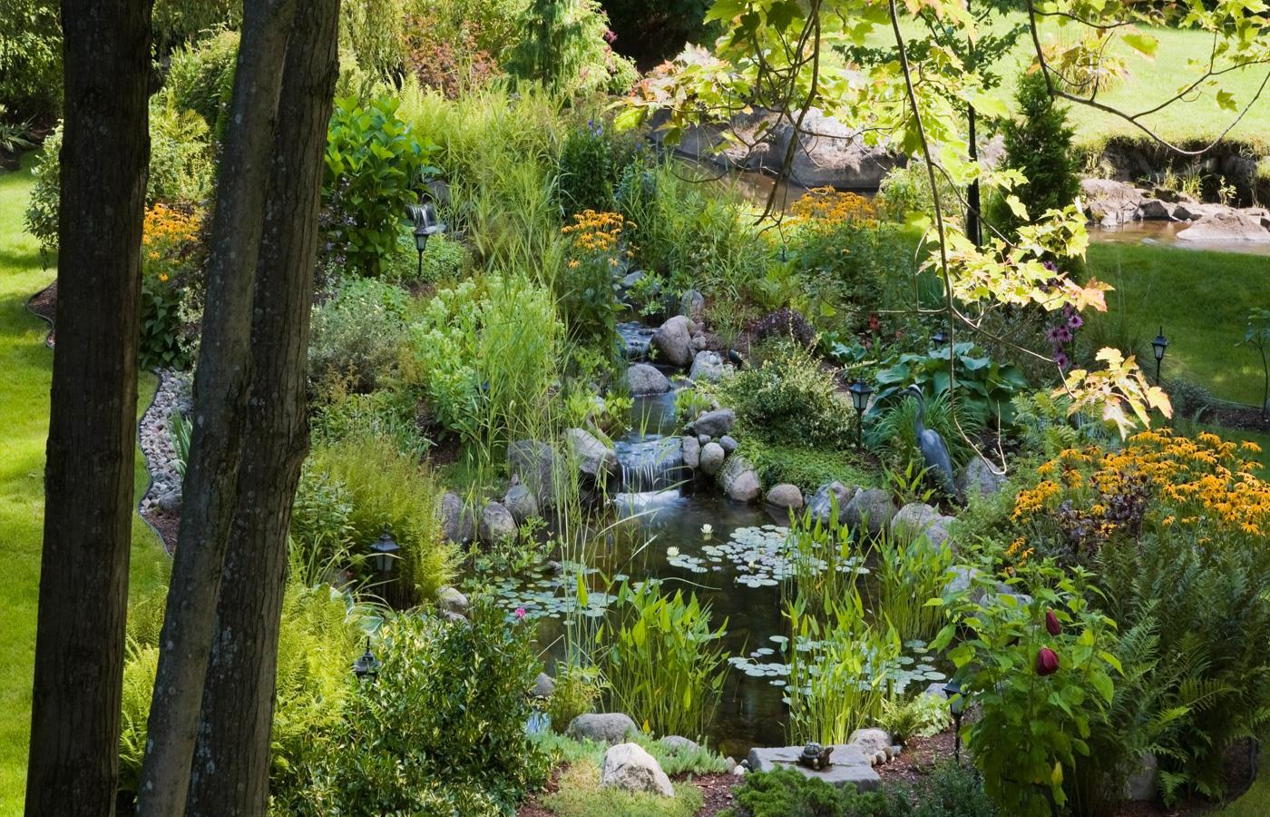 Jardins Aquatique aquadesign